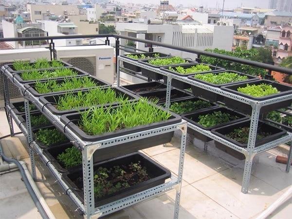 Trồng rau tại ban công tiết kiệm diện tích sử dụng Khay nhựa để trồng rau