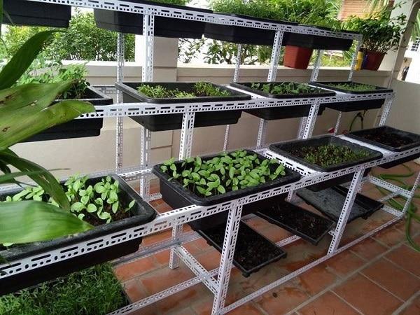 Xu hướng trông rau sạch tại nhà bằng chậu/khay nhựa trồng rau